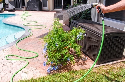 Watering Flowers With Hose